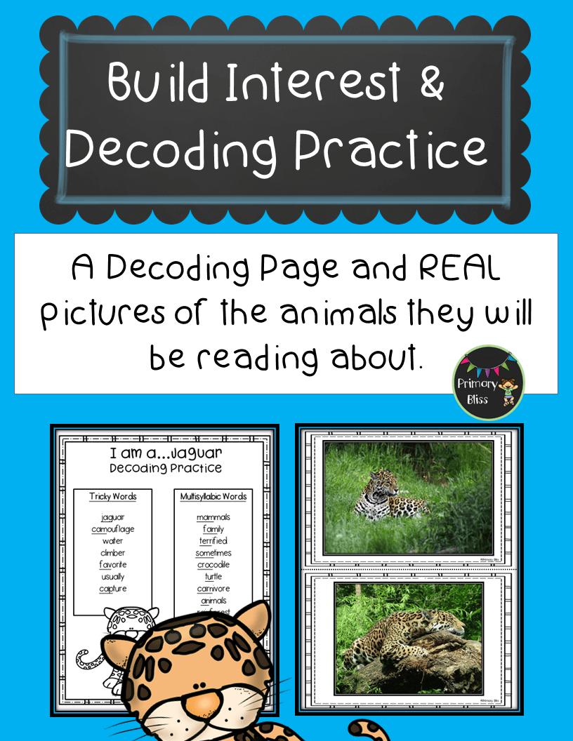 Rainforest Unit Reading Writing Science Bookmaking