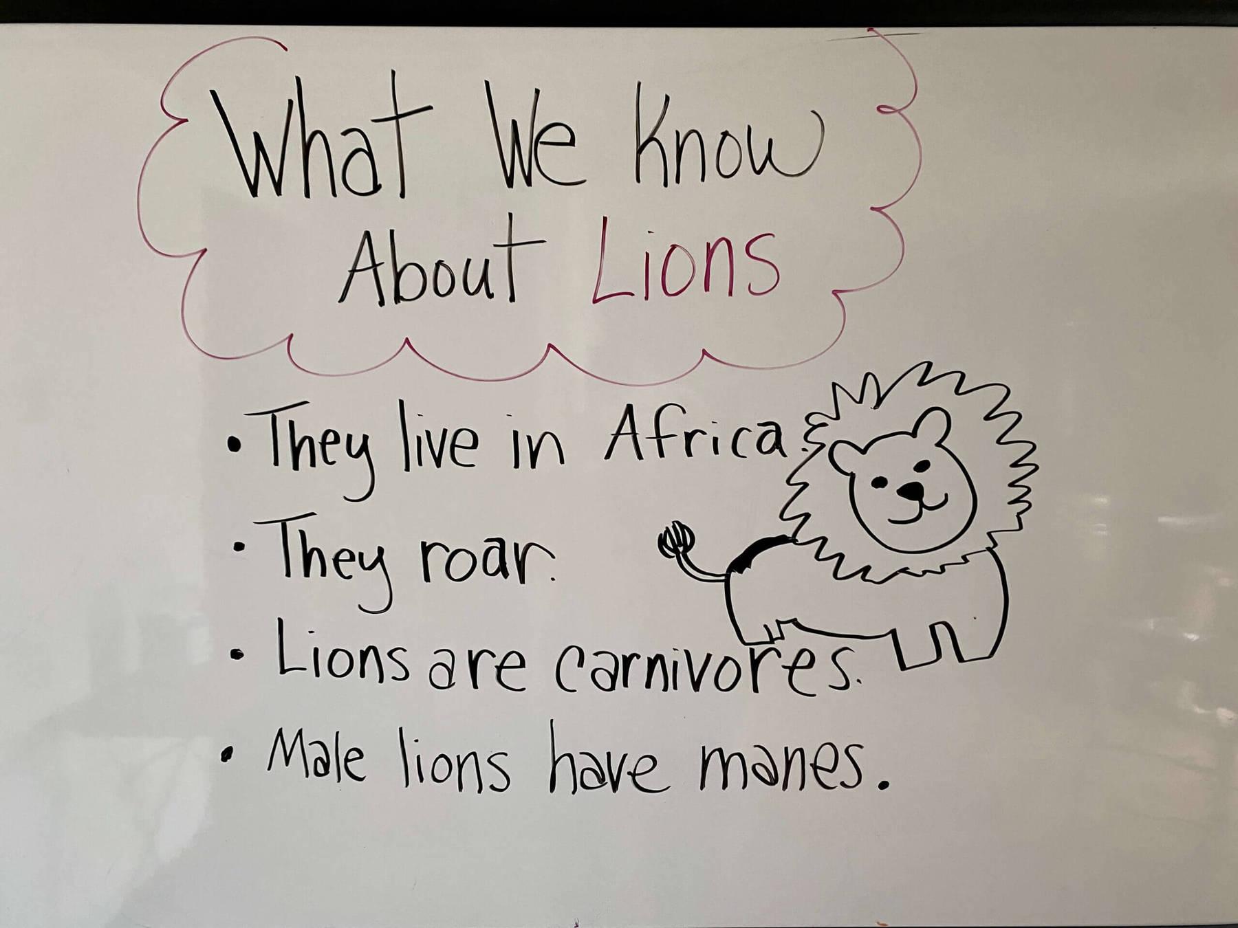 whiteboard kwl on lions