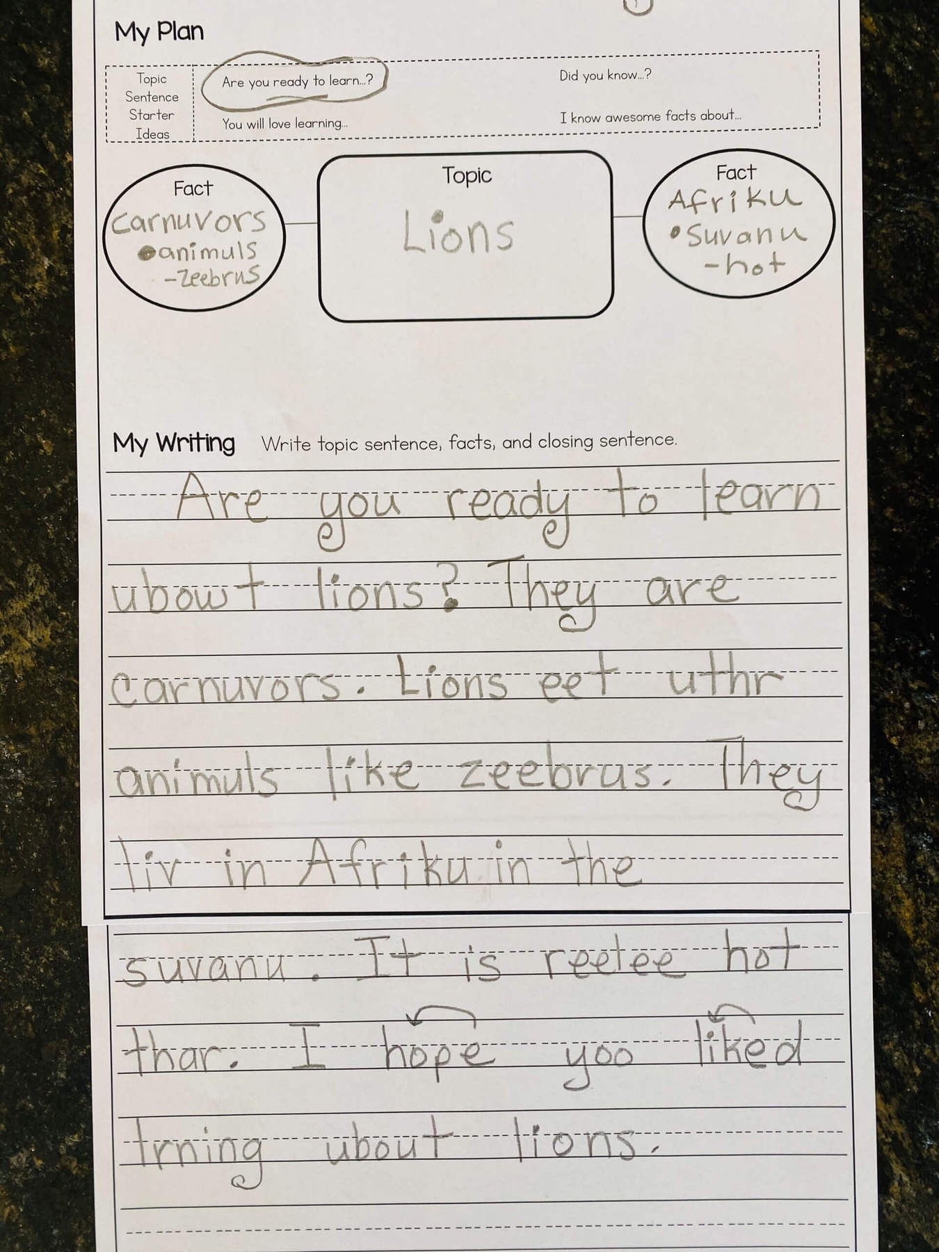 First grade informative writing sample on lions.
