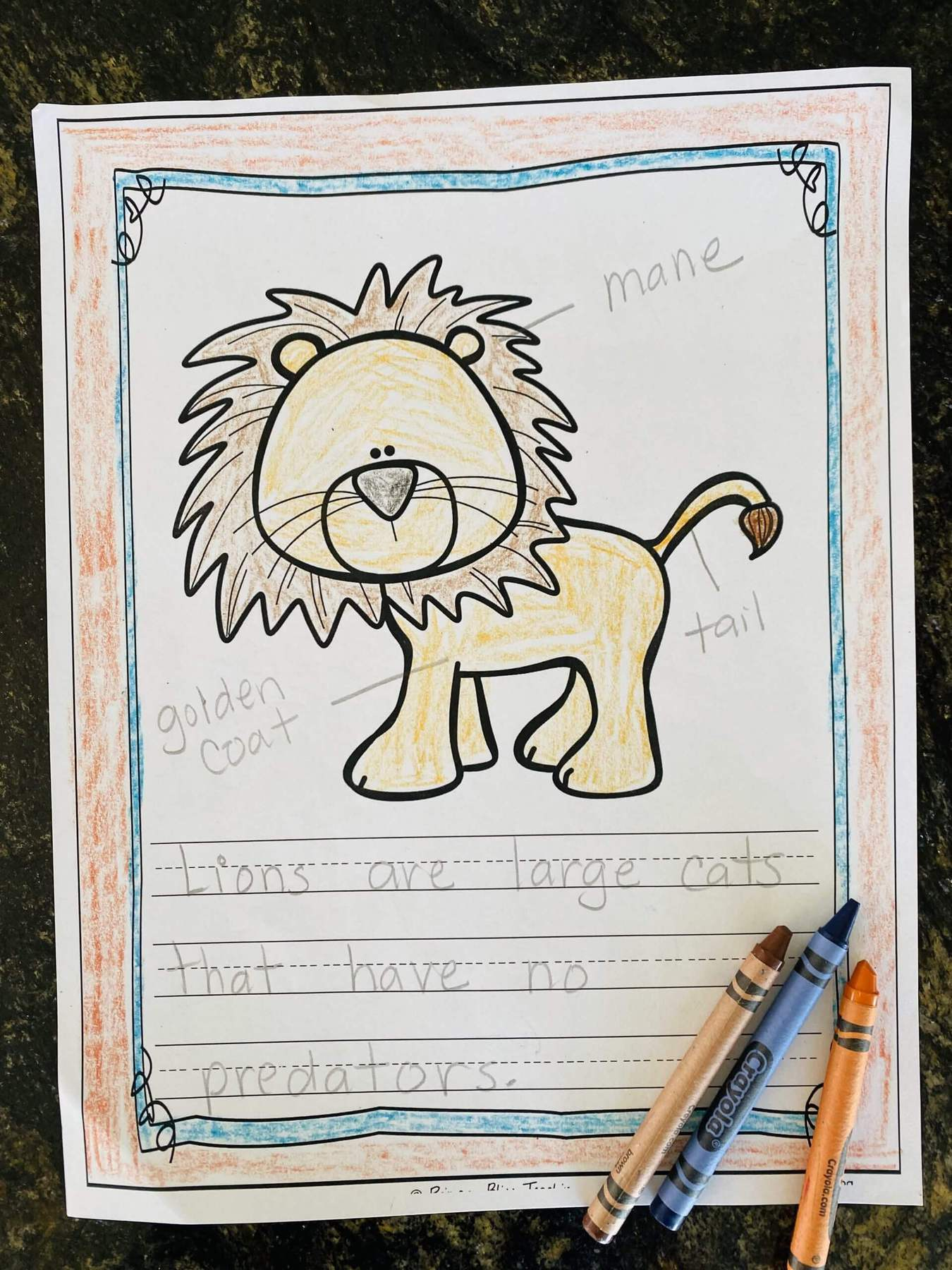 lion picture with labels and captions