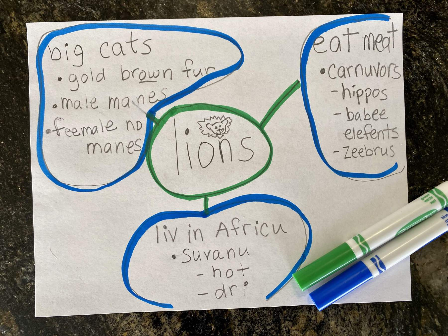 1st grade writing plan for lions